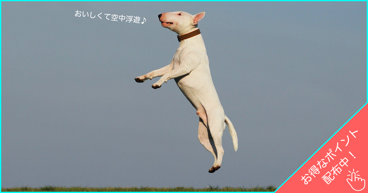 100%人間基準のドッグフードがおすすめ!愛犬の食生活を見直そう! | ANIMALive
