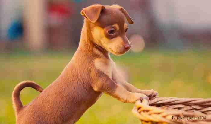 名づけ方を日米で比較!アメリカで最も多い犬の名前は? | イヌモネコモ