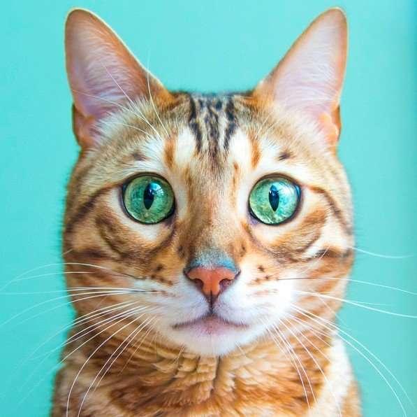 まるで水晶!猫の目が綺麗すぎる!見てると吸い込まれる♪ | ANIMALive
