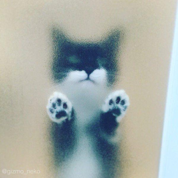 【画像】猫の足が不思議と集まるトピ