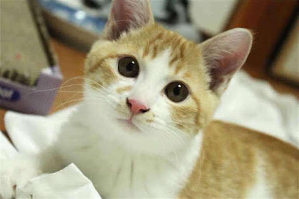 猫の画像 - 情報発信場