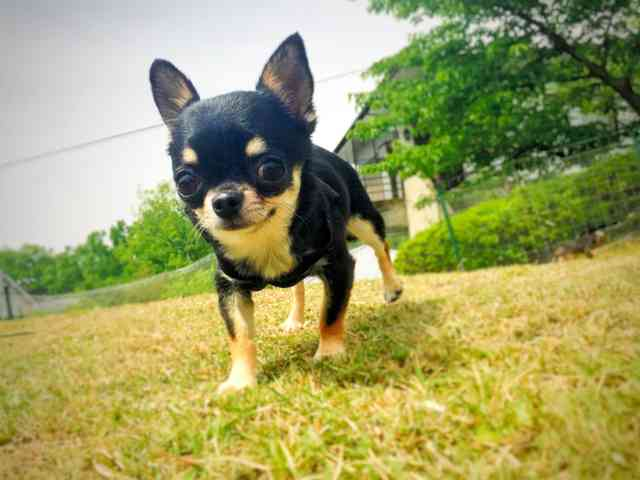 ペット買ったら病気、トラブル多発 店「取り換えます」:朝日新聞デジタル