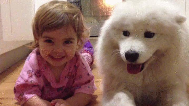 Smiling Child and Samoyed Puppy - GIF on Imgur