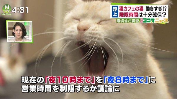 猫カフェ、午後10時まで営業OK 業界「猫は夜行性」
