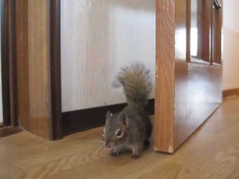 奥さん、このドア直しといてあげるね - Ma'am, I'll fix the door. - YouTube