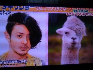 芸能人・有名人に似た動物
