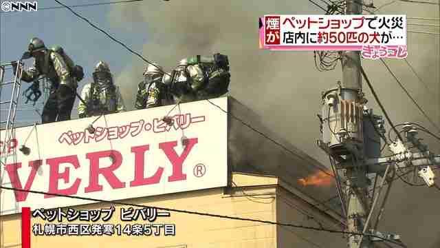 札幌市の約50匹の犬がいるペットショップで火災 - ライブドアニュース