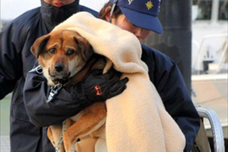 「ペットは家族」「人優先は仕方ない」ペット連れの被災者が行き場に困る…