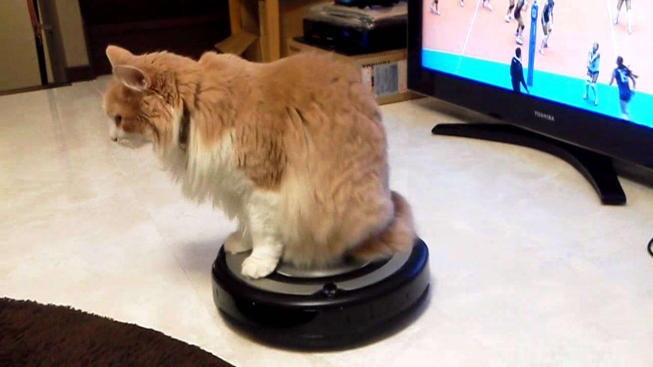 ルンバに乗るネコ Cat riding ROOMBA - YouTube