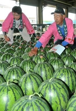 「糖度、玉太り申し分ない」  大分の日田スイカ出荷始まる (西日本新聞) - Yahoo!ニュース