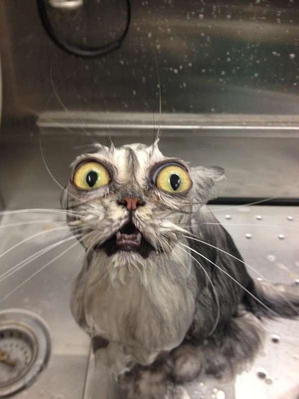 【ペットinお風呂】同じ子だとは思えない!動物たちのビフォア・アフター