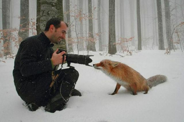 人間の邪魔をする動物たちの画像トピ