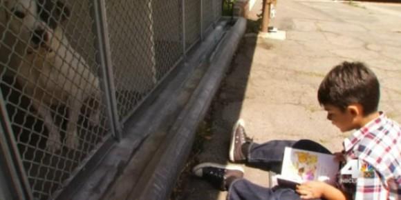 辛い境遇を背負い保護施設に収容された犬たちの為に1年以上本の読み聞かせを続けている6歳の自閉症を抱えた少年(アメリカ) : カラパイア