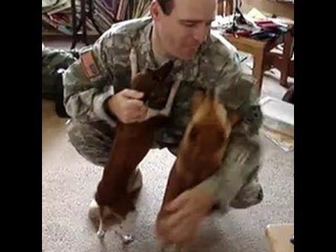 戦地から帰ってきた飼い主に飛びつく大喜びの犬 - YouTube
