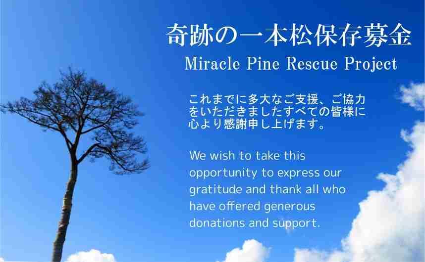 奇跡の一本松保存募金について