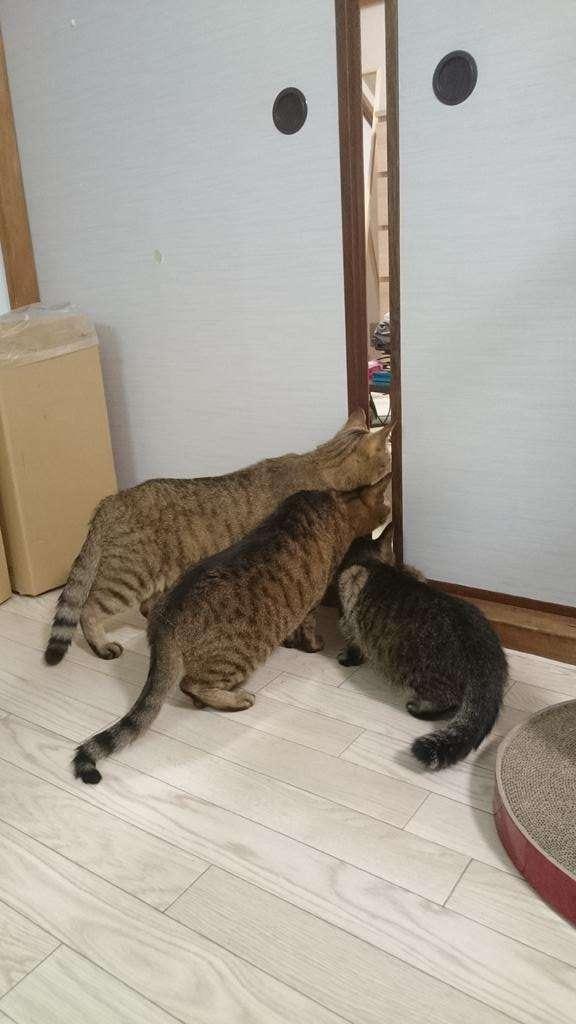 ネコの近くで掃除機をかけた結果wwwwwwwwwwwwww:ハムスター速報