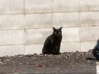 「この猫…影がおかしなことになってる!」→よく見ると…