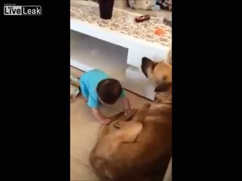 犬が赤ちゃんにブチ切れて頭を噛む - YouTube