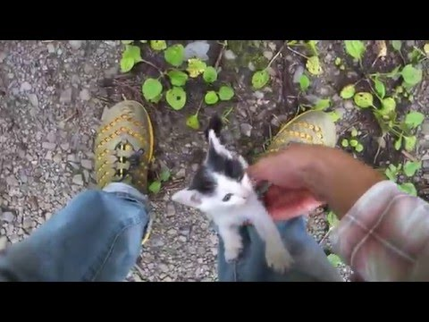 バイクで林道行ったら子猫が捨てられてたので持って帰ってみた。 - YouTube