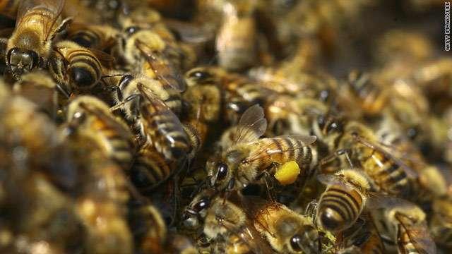 数千匹の蜂の群れが2日間にわたって自動車に取りつく(英)