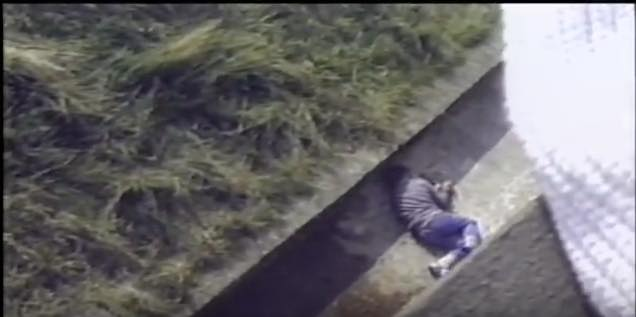 動物園のゴリラが住むエリアに落ちて気絶した子供。誰もが固唾を飲んで見守る中、ゴリラが取った驚きの行動とは…