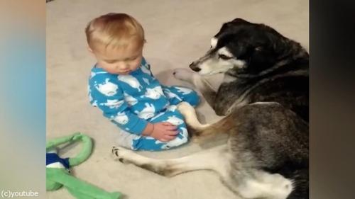 目の前で赤ちゃんがウトウト、やさしい犬がとった行動は…