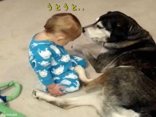 目の前で赤ちゃんがウトウト、やさしい犬がとった行動は…(動画):らばQ