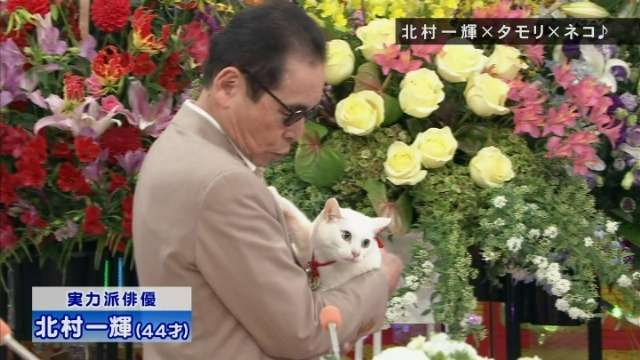 猫×有名人の画像集めたいฅ(=✧ω✧=)ฅ