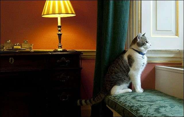 イギリスでは猫も立派な公務員!?英国首相官邸のネズミ捕獲長 |  アニマミーア!