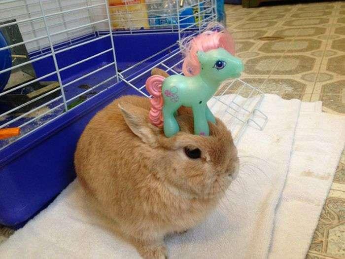 うちのウサギがおとなしいので頭にいろいろ乗せてみた:ハムスター速報