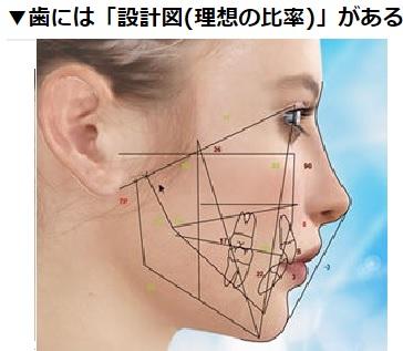 鼻の下から上唇の間が長い人