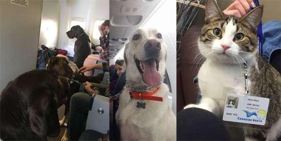ペットも客室内搭乗OK。大規模な山火事で避難する人々にカナダの航空会社が従来のルールを覆す異例の措置 : カラパイア