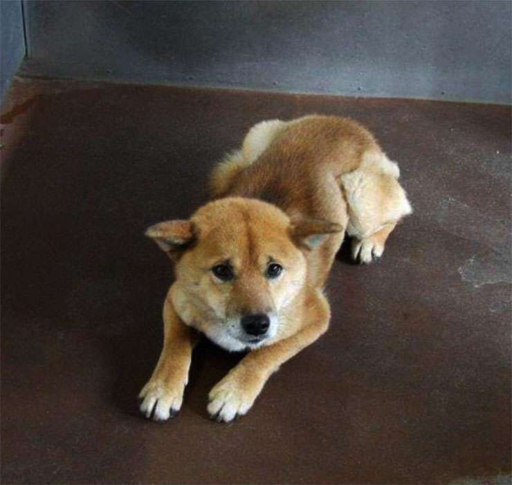 保健所で殺処分を待つ犬の情報を見られるサイト / 引き取り人が現れると助かる | バズプラスニュース Buzz+