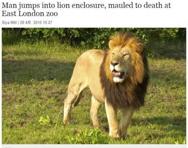 動物園で惨劇。ライオンの檻に30代男性が自ら飛び込む。(南ア)