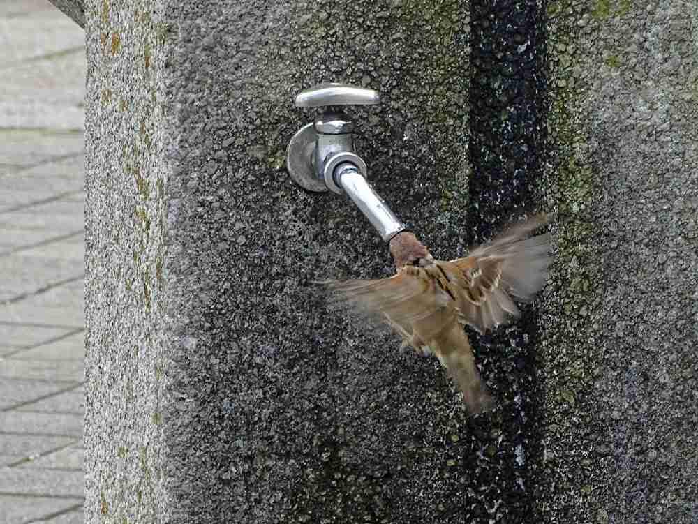【疑問】子供に公園の水 飲ませてますか?
