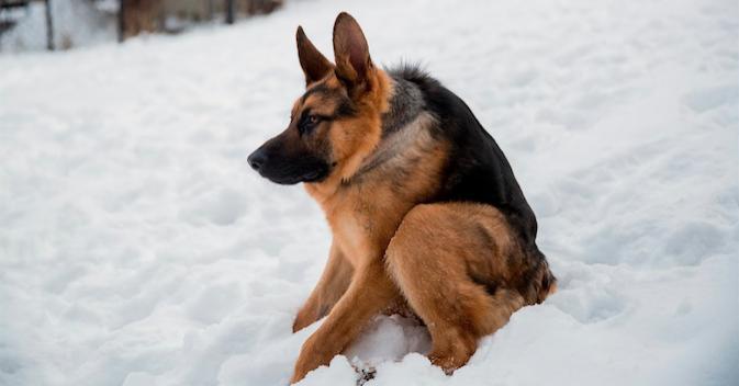 胴の短い容姿が原因で一度は捨てられた犬が、その容姿を武器に世界中の人気者に!|ペットフィルム -犬・猫・ペットの画像・動画まとめ petfilm.biz