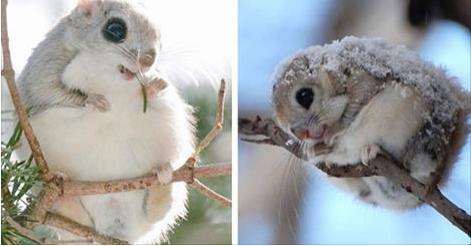 世界一可愛いと思う動物の画像を貼ってください。
