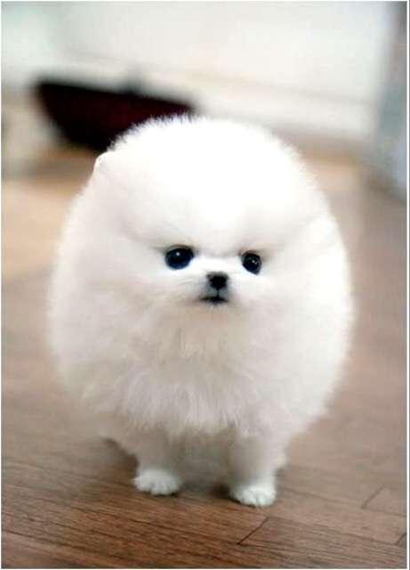 【画像】白くて丸くて可愛いもの