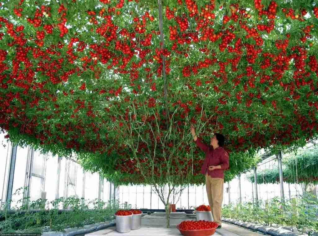 【家庭菜園】収穫報告会