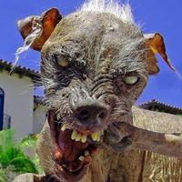 「世界で最も醜い犬コンテスト」歴代優勝犬がヤバイ! - NAVER まとめ