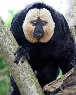 かわいいと思えない動物。