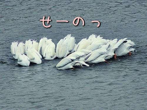 その動きに拍手したくなる!やけにシンクロ率の高い動物たちの写真(PART2)
