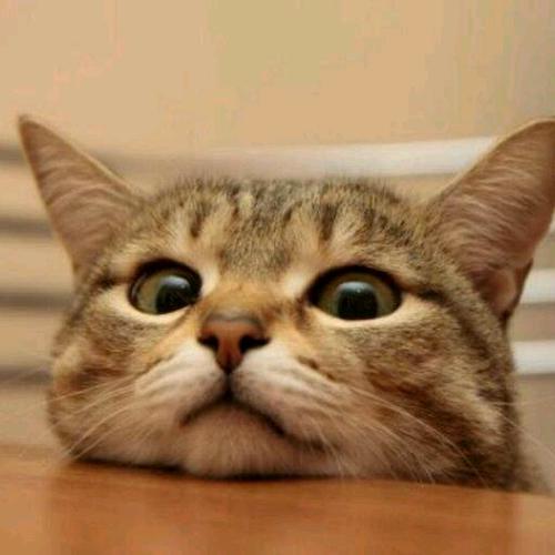 猫っぽいジャニーズタレントランキング