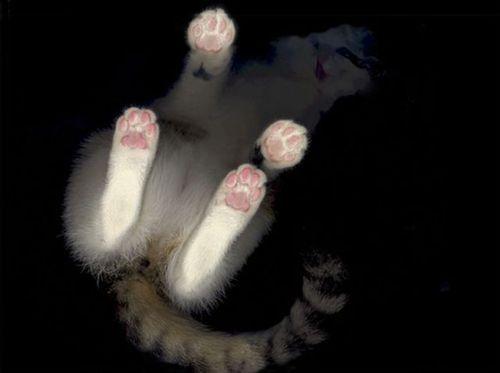 スキャナーに飛び乗った猫がスキャンされて肉球がプニプニw