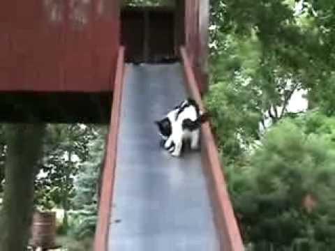 滑り台から滑り落ちる子猫さんを助ける親猫さん.flv - YouTube