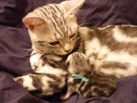 「ママ猫やママ犬が子育てに奮闘しているときは…こんな顔になる」写真いろいろ