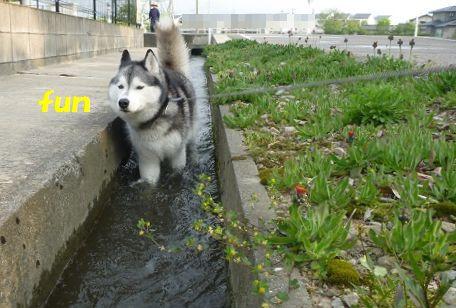 自宅の近く(隣)に用水路がある人