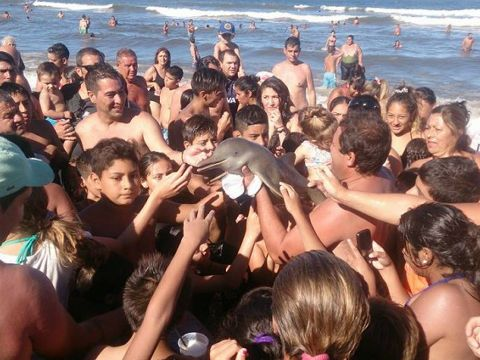 子イルカを観光客らが海から引きずり出してもみくちゃに写真撮影→脱水で死亡し大炎上