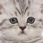 動物愛護家「東京ディズニーランドって動物に優しい夢の国じゃなかったっけ!?」が炎上 | ANIMALive