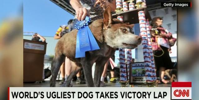 今年も「世界一醜い犬」が決定、「外見で判断しないで」